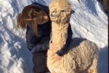 Alpaca knuffelen, waar kunnen we dan doen?