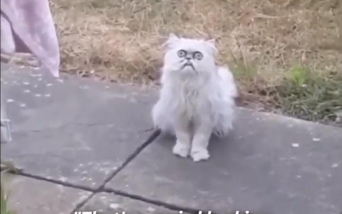 Zwerfkat in de tuin en dus roept deze jongen in paniek om zijn moeder